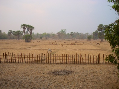 Platteland van Cambodja.