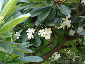 Deze bloem zien we veel!