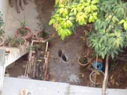 Brrrr? Zie je die 2 dikkerds daar? Zeker als het regent rennen er veel ratten door Phnom Penh!