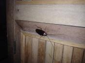 Kakkerlakken... 's Avonds, net voordat je lekker wilt gaan slapen...