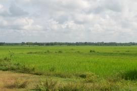 Mooie groene velden
