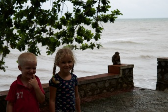 Hoeveel apen ziet u?