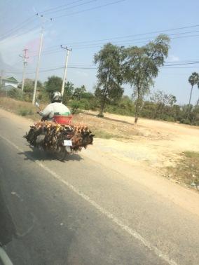 Creatief vervoer